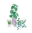 potted homeplants flat vector image vector image