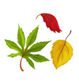sketch autumn leaves set vector image vector image