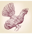 wood grouse hand drawn illustration vector image