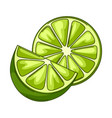 limes whole and slices vector image