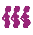 collection of pregnant women vector image