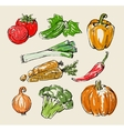 color vegetables vector image vector image
