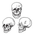 human skull sketch set medical and science vector image vector image