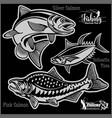 pink salmon silver salmon and yellowfin tuna vector image vector image