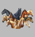 set of horses breeds 10 vector image vector image