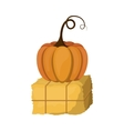 Pumpkin and hay of Thanksgiving vector image vector image