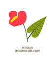 anthurium tropical flower vector image vector image