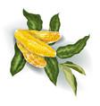 image of decorative element with 3 orange citrus vector image