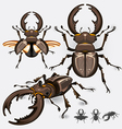 Stag Beetle Insect vector image vector image