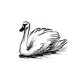 ink sketch swan vector image vector image