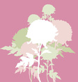 peon flowers vector image vector image