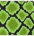 Green seamless pattern of reptile skin vector image vector image