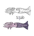 hand drawn squid black and white and color vector image