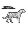 leopard sketch zoo and african jungle wild animal vector image vector image