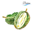 Durian vector image