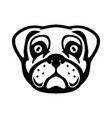 Pug dog head in engraving style design element