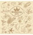 Retro of Ayurvedic herbs Set of web vector image