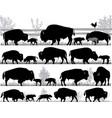 american bison buffalo vector image vector image