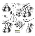 hand drawn set of pears vector image vector image