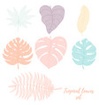 hand drawn tropical palm leaves set vector image vector image