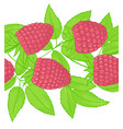 raspberry seamless patterns endless ornament twig vector image
