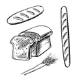 Sliced bread long loaf and baguette vector image