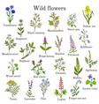 wild flowers color set vector image vector image