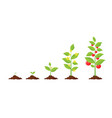 growth of plant from sprout to vegetable vector image