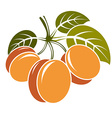 Harvesting symbol fruits isolated Three ripe vector image vector image