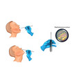throat and nose swab vector image vector image