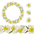 Collection of narcissus flowers