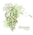 hand drawn grapes vector image