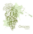 Hand drawn of grapes vector image