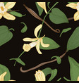 elegant natural seamless pattern with vanilla vector image vector image