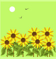 ripe sunflowers under dim sun in green sky with vector image