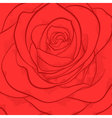 beautiful background with red rose close-up vector image vector image
