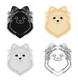 breed of a dog spitzmuzzle spitz single icon in vector image