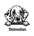 dalmatian - color peeking dogs - breed face head vector image vector image