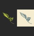 hop leaves for malt beer engraved vintage set vector image