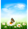 nature background with grass and butterfly vector image