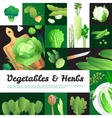 Organic Green Vegetables Banners Composition vector image