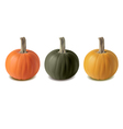 pumkin three color vector image vector image