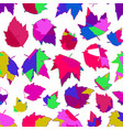 seamless background autumn maple leaves on white vector image