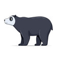 spectacled bear animal standing on a white vector image