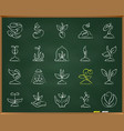 sprout chalk draw line icons set vector image