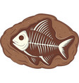 underground fish fossil vector image vector image