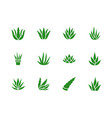 aloe vera flat glyph icons succulent tropical vector image vector image