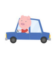 colored kids transport with cute little pig or hog