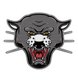 pantera head on white background design element vector image vector image