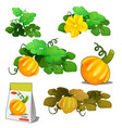 set of stages of life of a agricultural plant vector image
